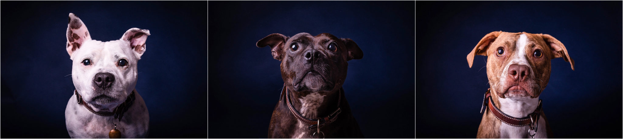 studio-dog-photo-shoot